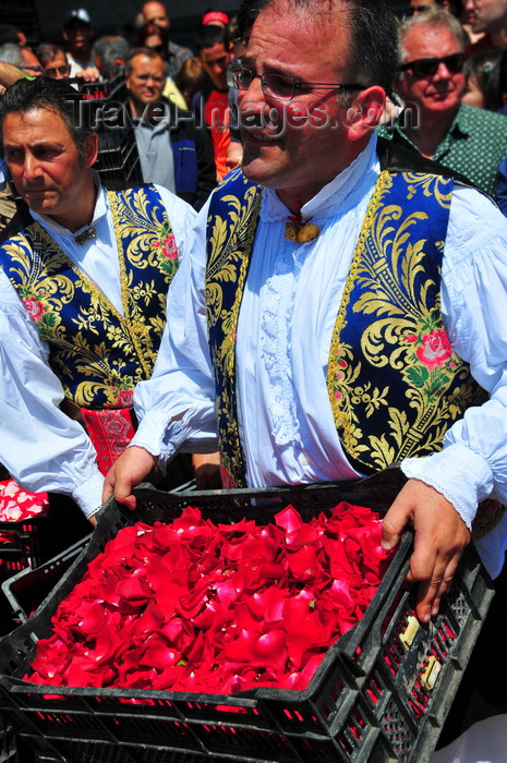 sardinia392: Cagliari, Sardinia / Sardegna / Sardigna: Feast of Sant'Efisio / Sagra di Sant'Efisio - giving away rose petals for 'Sa Ramadura' - photo by M.Torres - (c) Travel-Images.com - Stock Photography agency - Image Bank