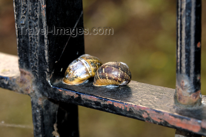 scot112: Scotland - Edinburgh: two snails soak up the sun's heat on a wrought iron fence - photo by C.McEachern - (c) Travel-Images.com - Stock Photography agency - Image Bank