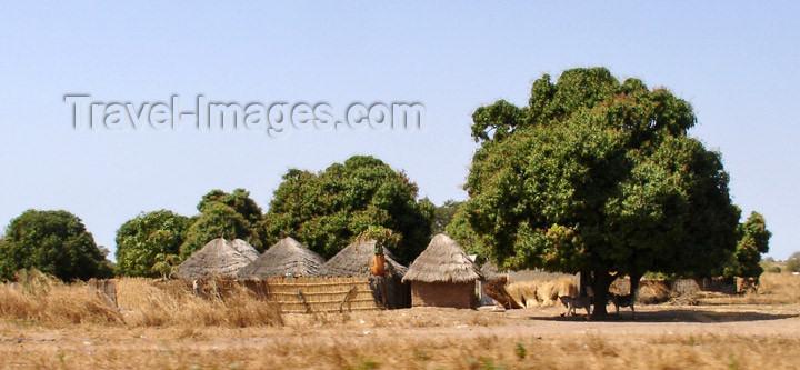 senegal94: Senegal - Savannah: huts - photo by G.Frysinger - (c) Travel-Images.com - Stock Photography agency - Image Bank