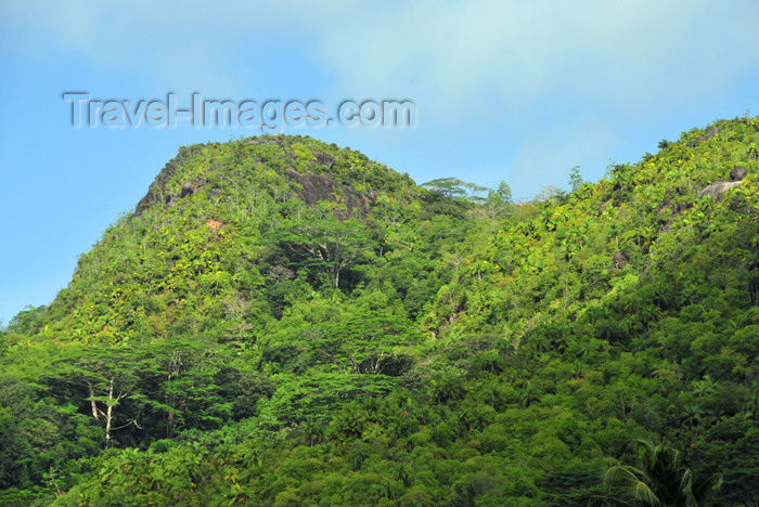 seychelles109: Mahe, Seychelles: Anse à la Mouche - hills covered in dense forest - photo by M.Torres - (c) Travel-Images.com - Stock Photography agency - Image Bank