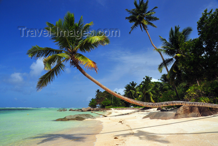 seychelles125: Mahe, Seychelles: Anse Royal - quintessential tropical beach - deep blue sky, emerald water, golden sand, coconut trees - photo by M.Torres - (c) Travel-Images.com - Stock Photography agency - Image Bank