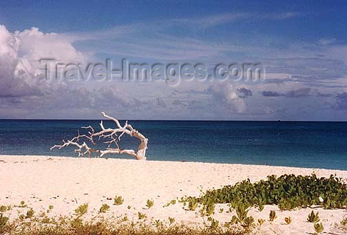 seychelles71: Seychelles - Aldabra atoll (Unesco World Heritage site): on the beach (photo by G.Frysinger)) - (c) Travel-Images.com - Stock Photography agency - Image Bank