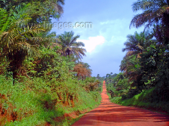 sierra-leone26: Southern Province, Sierra Leone: dirt road between Bo and Cambama - photo by T.Trenchard - (c) Travel-Images.com - Stock Photography agency - Image Bank