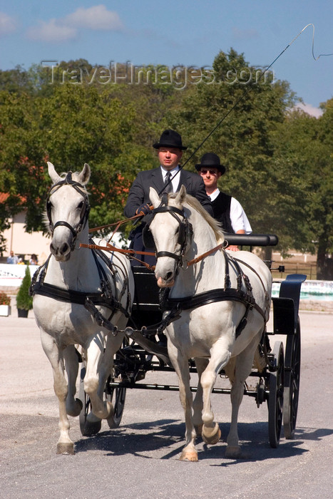 slovenia128: Slovenia - Lipica / Lipizza - Goriska region: Lipica stud farm - Combined driving event - the dressage test - Carriage Driving - photo by I.Middleton - (c) Travel-Images.com - Stock Photography agency - Image Bank