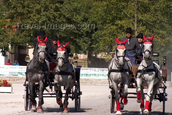 slovenia130: Slovenia - Lipica / Lipizza - Goriska region: Lipica stud farm - Combined driving event - two britzkas - Carriage Driving - photo by I.Middleton - (c) Travel-Images.com - Stock Photography agency - Image Bank