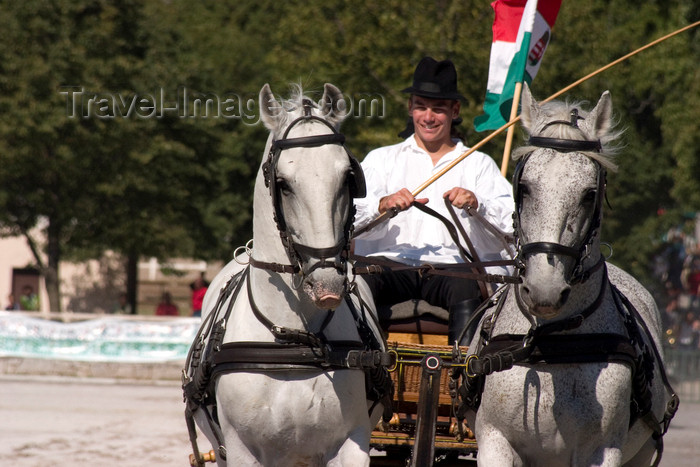 slovenia135: Slovenia - Lipica / Lipizza - Goriska region: Lipica stud farm - Combined driving event - flyng the flag of the Austro-Hungarian empire - Carriage Driving - photo by I.Middleton - (c) Travel-Images.com - Stock Photography agency - Image Bank