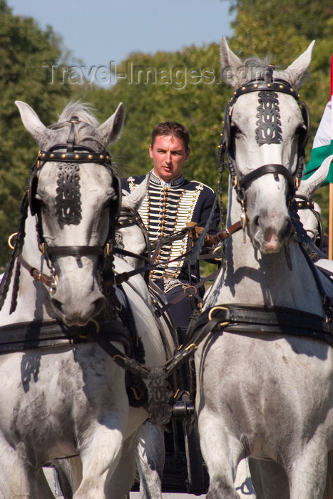 slovenia136: Slovenia - Lipica / Lipizza - Goriska region: Lipica stud farm - Combined driving event - Carriage Driving - front view of horses and driver - photo by I.Middleton - (c) Travel-Images.com - Stock Photography agency - Image Bank