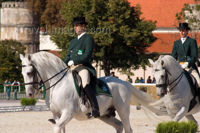 slovenia138: Slovenia - Stud farm in western Slovenia where the world famous lipizzaner horses perform - dressage - photo by I.Middleton - (c) Travel-Images.com - Stock Photography agency - Image Bank
