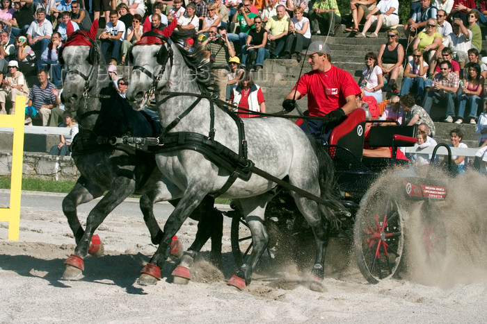 slovenia145: Slovenia - Lipica / Lipizza - Goriska region: Lipica stud farm - Combined driving event - Carriage Driving - negotiating the sand - photo by I.Middleton - (c) Travel-Images.com - Stock Photography agency - Image Bank