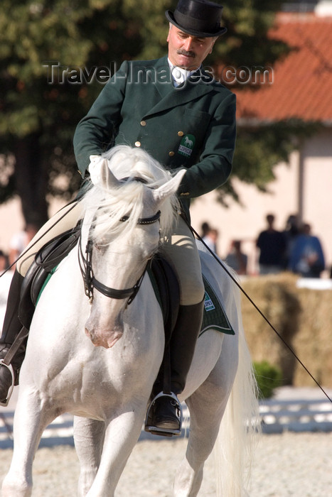 slovenia149: Slovenia - Lipica / Lipizza - Goriska region: Lipica stud farm - dressage competitor and a pure white Lipizzaner hors - extended trot - photo by I.Middleton - (c) Travel-Images.com - Stock Photography agency - Image Bank