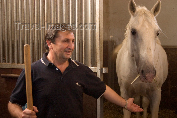 slovenia152: Slovenia - Lipica - Goriska region: Lipica stud farm - in the stables - lipizzaner horse and worker - photo by I.Middleton - (c) Travel-Images.com - Stock Photography agency - Image Bank