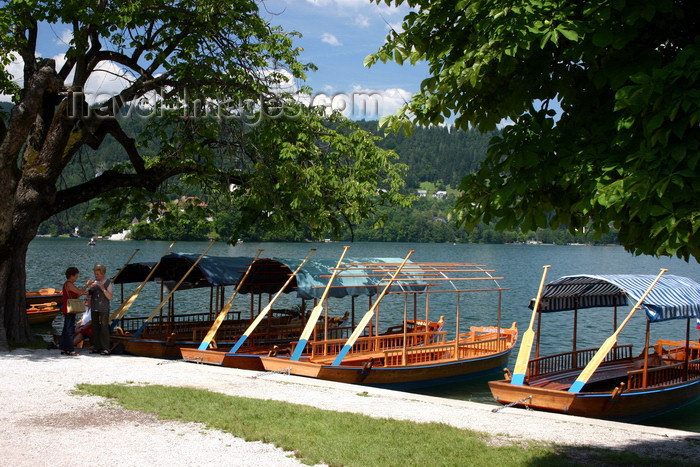 slovenia161: Slovenia - the local gondolas, called Pletnas, moored on Lake Bled - photo by I.Middleton - (c) Travel-Images.com - Stock Photography agency - Image Bank