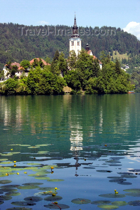 slovenia163: Slovenia - Assumption of Mary's Church reflected on Lake Bled - photo by I.Middleton - (c) Travel-Images.com - Stock Photography agency - Image Bank