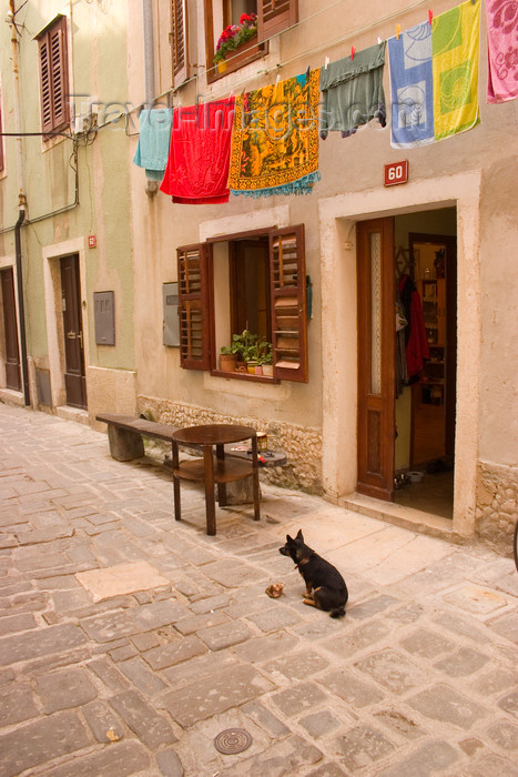 slovenia299: Slovenia - Piran: Narrow street - clothes line and dog - photo by I.Middleton - (c) Travel-Images.com - Stock Photography agency - Image Bank