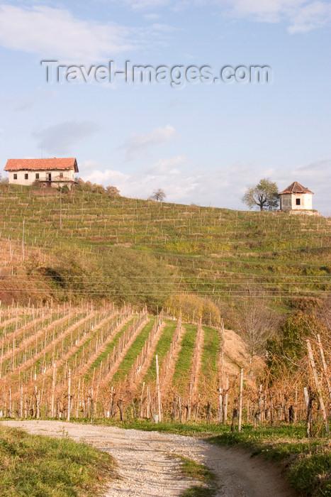 slovenia333: Slovenia - Wine hills - vineyards in autumn around Brezice, Southeast Slovenia on the border with Croatia - photo by I.Middleton - (c) Travel-Images.com - Stock Photography agency - Image Bank