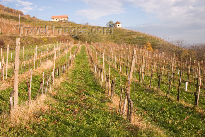 slovenia335: Slovenia -vineyard around Brezice - photo by I.Middleton - (c) Travel-Images.com - Stock Photography agency - Image Bank