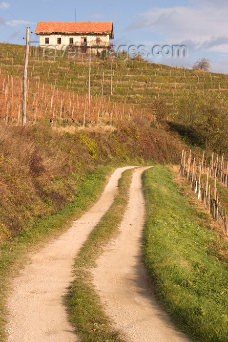 slovenia337: Slovenia - rural road and vineyards near Brezice - photo by I.Middleton - (c) Travel-Images.com - Stock Photography agency - Image Bank