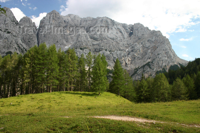 slovenia651: Slovenia - Julian Alps seen from Vrsic pass - edge of the forest - photo by I.Middleton - (c) Travel-Images.com - Stock Photography agency - Image Bank