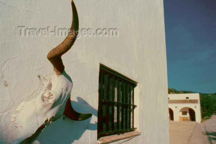 spai275: Spain - Cadiz - Bull skull in the wall of an Andalusian farm - photo by K.Strobel - (c) Travel-Images.com - Stock Photography agency - Image Bank