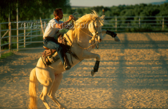 spai294: Spain - Villamartín -  Cadiz province - Rider performing a Spin Up, Horse training centre - photo by K.Strobel - (c) Travel-Images.com - Stock Photography agency - Image Bank