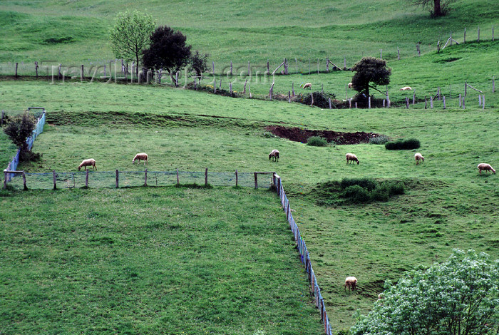 spai418: Spain - Cantabria - Cosgaya - green fields of Cantabria - photo by F.Rigaud - (c) Travel-Images.com - Stock Photography agency - Image Bank