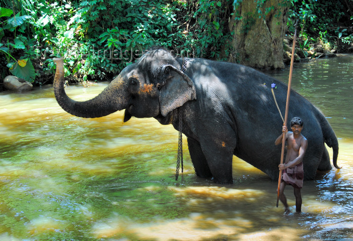 Kegalle Sri Lanka  city photos gallery : sri lanka346: Kegalle, Sabaragamuwa province, Sri Lanka: a mahout ...