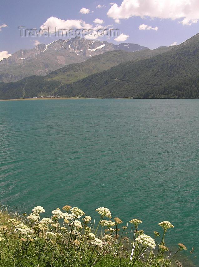 switz323: Switzerland - Maloja / Maloggia - Graubünden / Grigioni canton - flowers and Lake Silvaplana / Silvaplanersee - photo by J.Kaman - (c) Travel-Images.com - Stock Photography agency - Image Bank