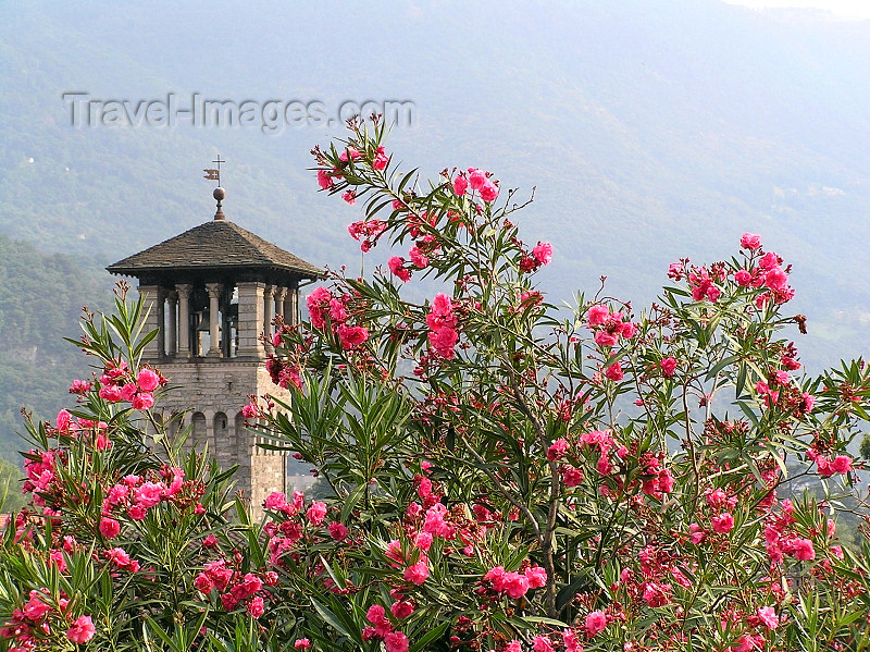 switz369: Switzerland - Bellinzona, Ticino canton: flowers and belfry - photo by J.Kaman - (c) Travel-Images.com - Stock Photography agency - Image Bank