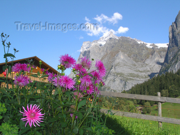 switz387: Wengen, Berner Oberland, Switzerland: chalet, pink flowers and mountains - photo by E.Keren - (c) Travel-Images.com - Stock Photography agency - Image Bank