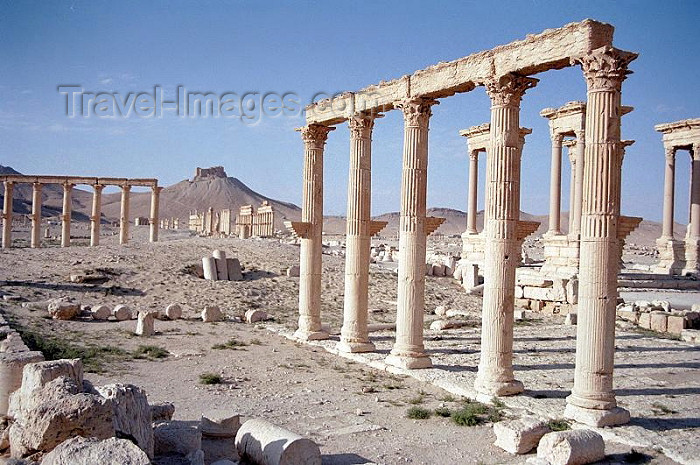 syria40: Palmyra, Syria: looking west form the senate house - photo by J.Kaman - (c) Travel-Images.com - Stock Photography agency - Image Bank