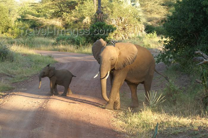 tanzania102: Tanzania - Elephant with a baby in Lake Manyara National Park - photo by A.Ferrari - (c) Travel-Images.com - Stock Photography agency - Image Bank