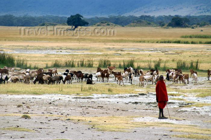 tanzania108: Tanzania - Masai shepherd in Ngorongoro Crater - photo by A.Ferrari - (c) Travel-Images.com - Stock Photography agency - Image Bank