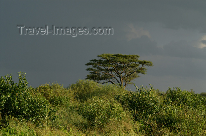 tanzania178: Tanzania - Dark clouds over Serengeti National Park - photo by A.Ferrari - (c) Travel-Images.com - Stock Photography agency - Image Bank