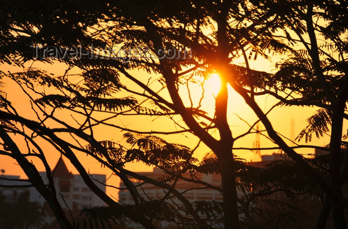 tanzania208: Dar es Salaam, Tanzania: sunset on the waterfront - acacia leaves - photo by M.Torres - (c) Travel-Images.com - Stock Photography agency - Image Bank