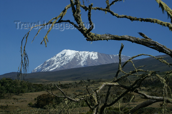 tanzania40: Tanzania - Kilimanjaro NP: Marangu Route - day 2 - Mount Kilimanjaro, the Kibo peak seen from the moorlands - photo by A.Ferrari - (c) Travel-Images.com - Stock Photography agency - Image Bank