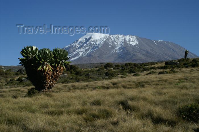 tanzania56: Tanzania - Kilimanjaro NP: Marangu Route - day 4 - Mount Kilimanjaro, Kibo, at the start from Horombo hut - photo by A.Ferrari - (c) Travel-Images.com - Stock Photography agency - Image Bank
