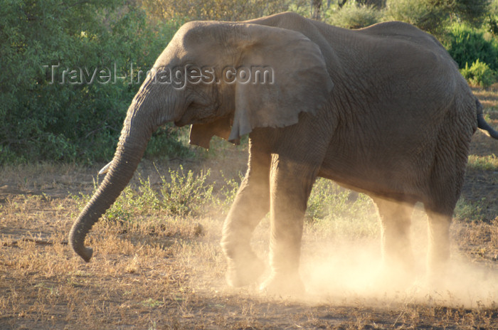 tanzania99: Tanzania - Elephant making dust - Lake Manyara National Park - photo by A.Ferrari - (c) Travel-Images.com - Stock Photography agency - Image Bank