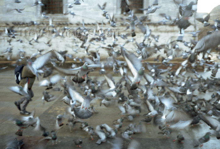 turkey502: Istanbul, Turkey:  pigeons near the New Mosque - Eminönü District - photo by S.Lund - (c) Travel-Images.com - Stock Photography agency - Image Bank