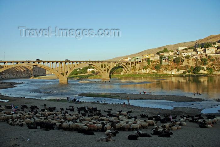 turkey607: Hasankeyf / Heskif, Batman Province, Southeastern Anatolia, Turkey: sheep and the new Tigris bridge - deck arch bridge - concrete span - civil engineering - photo by W.Allgöwer - (c) Travel-Images.com - Stock Photography agency - Image Bank