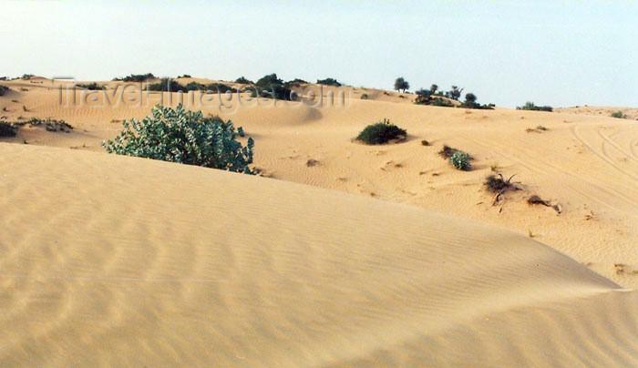 uaefj5: UAE - Al Fujairah: in the desert - dunes - photo by G.Frysinger - (c) Travel-Images.com - Stock Photography agency - Image Bank