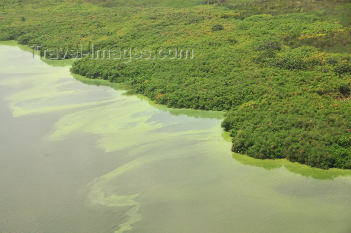 uganda11: Wakiso District, Uganda: wide magcroves on the banks of Lake Victoria, seen from the air - mostly  Rhizophora mucronata plants - photo by M.Torres - (c) Travel-Images.com - Stock Photography agency - Image Bank