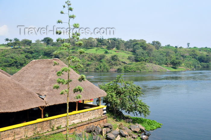 uganda146: Jinja, Uganda: source of the Nile river - small boat terminal and century plant - photo by M.Torres - (c) Travel-Images.com - Stock Photography agency - Image Bank