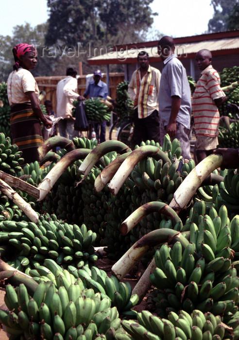 uganda31: Uganda - Fort Portal - bananas at the market - photos of Africa by F.Rigaud - (c) Travel-Images.com - Stock Photography agency - Image Bank