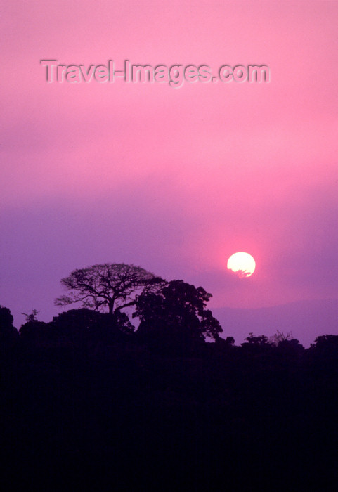 uganda35: Uganda - Fort Portal - sunset - tree silhouette - photos of Africa by F.Rigaud - (c) Travel-Images.com - Stock Photography agency - Image Bank
