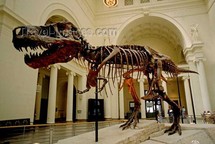 usa1081: Chicago, Illinois, USA: Tyrannosaurus Rex skeleton of Sue is on display inside the Field Museum of Natural History - one of the largest land carnivores of all time - photo by C.Lovell - (c) Travel-Images.com - Stock Photography agency - Image Bank
