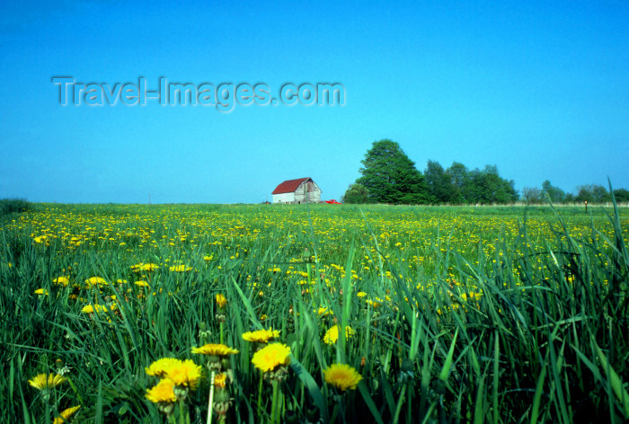 usa228: Pennsylvania, USA: farm - in the fields - rural scenic - agriculture - barn - photo by J.Fekete - (c) Travel-Images.com - Stock Photography agency - Image Bank