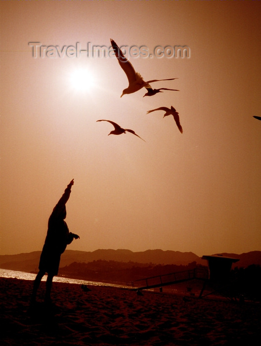 usa495: Malibu (California): beach - feeding the birds - Los Angeles County - Photo by G.Friedman - (c) Travel-Images.com - Stock Photography agency - Image Bank