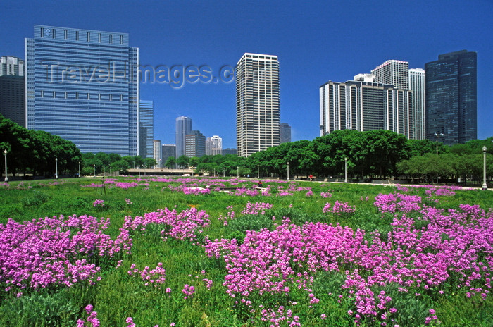 usa533: Chicago, Illinois, USA: skyscrapers backdrop a field of purple wildflowers in Grant Park - downtown - Blue Cross and Blue Shield tower, The Buckingham, Outer Drive East, Harbor Point Condominium - photo by C.Lovell - (c) Travel-Images.com - Stock Photography agency - Image Bank