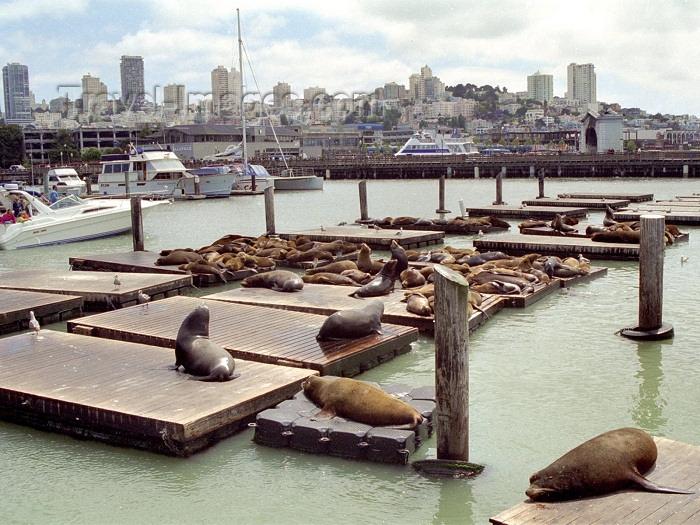 usa78: San Francisco (California): seals on the harbor - photo by M.Bergsma - (c) Travel-Images.com - Stock Photography agency - Image Bank