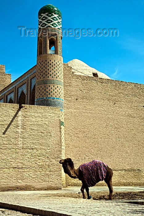 uzbekistan72: Camel outside Khiva City Walls, Uzbekistan - photo by A.Beaton  - (c) Travel-Images.com - Stock Photography agency - Image Bank